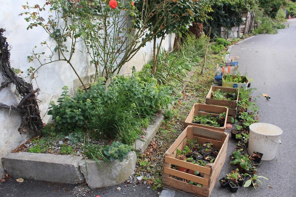 wivena GmbH Gartengestaltung